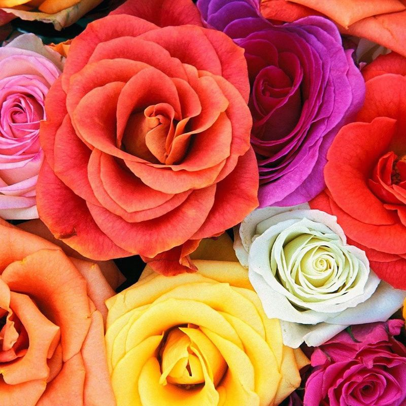 celebrity photo цветы № 123731