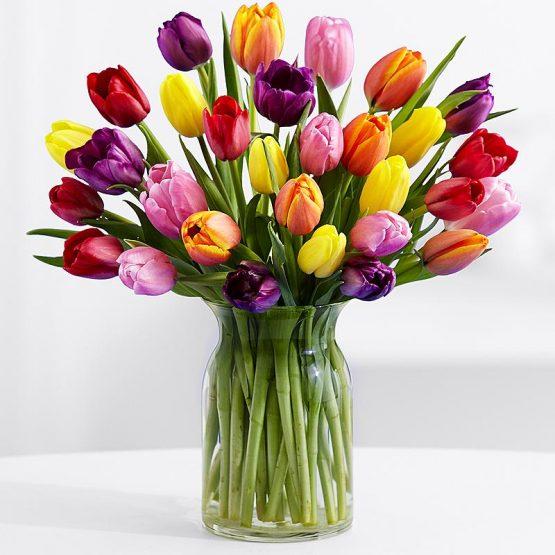 31 Разноцветный Тюльпан