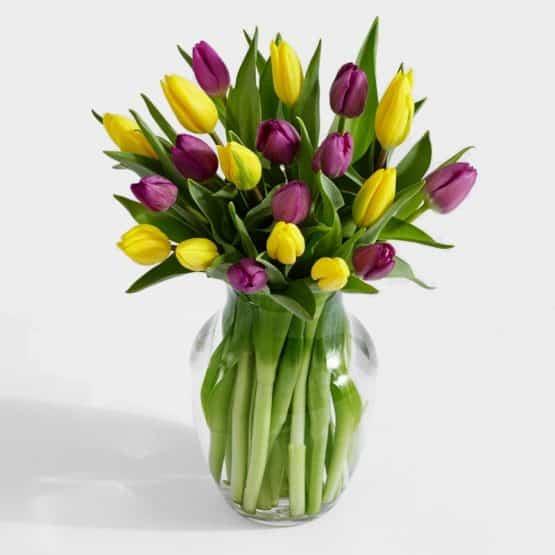 21 Королевских тюльпанов